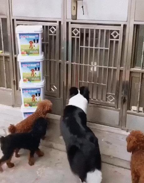 Самый ловкий Собака, Животные, Дверь, Открыть, Ловкость, Позитив, Видео, Гифка