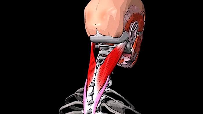 всякого сомнения. болит шея после инсульта выше