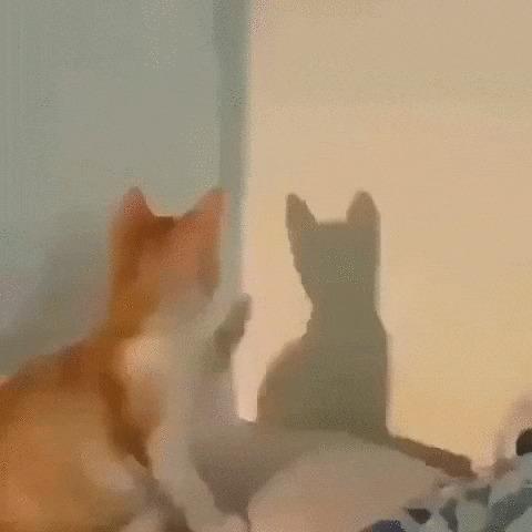 Двое: Я и моя тень Кот, Котята, Домашние животные, Тень, Стена, Гифка