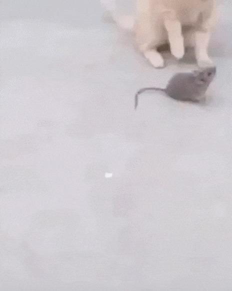 Проваливай, я вегетарианец! Кот, Котомафия, Мышь, Животные, Выгнали, Webm, Гифка