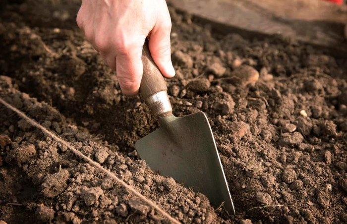 Выращивание моркови: раскрываем все секреты посадки и ухода за культурой Огород, Совет, Дачники, Морковь, Урожай, Agronews, Длиннопост