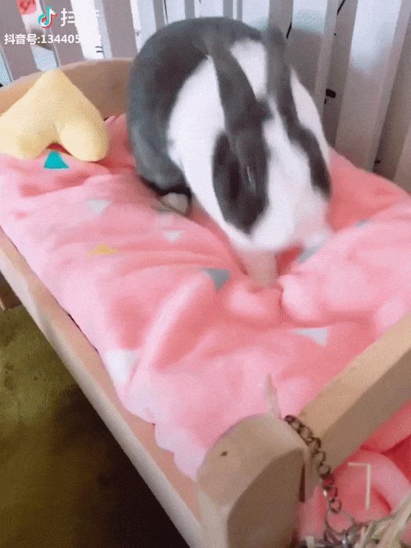 Остальные: Пятница! После работы по барам! Кролик, Кровать, Сон, Пятница, Гифка, Домашние животные