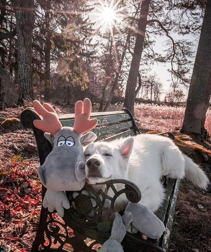 Осенняя встреча в парке