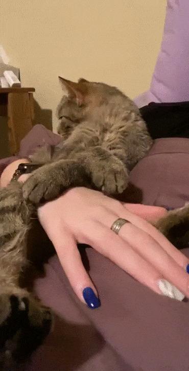 Это любовь Кот, Котомафия, Домашние животные, Поцелуй, Хозяйка, Девушки, Милота, Гифка