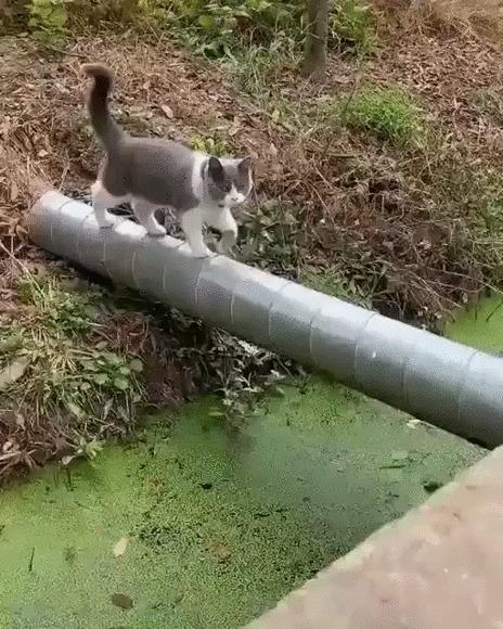 Осечка Кот, Котомафия, Животные, Прыжок, Падение, Вода, Гифка