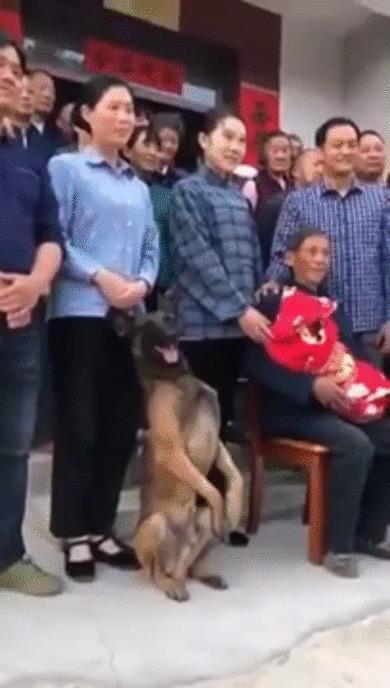 Хороший мальчик позирует на семейном фото Собака, Овчарка, Домашние животные, Семья, Семейное фото, Гифка