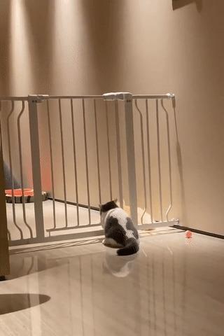 Голова пролезла — всё пролезет? Без звука, Кот, Домашние животные, Собака, Решетка, Барьер, Застрял, Вертикальное видео, Видео, Гифка