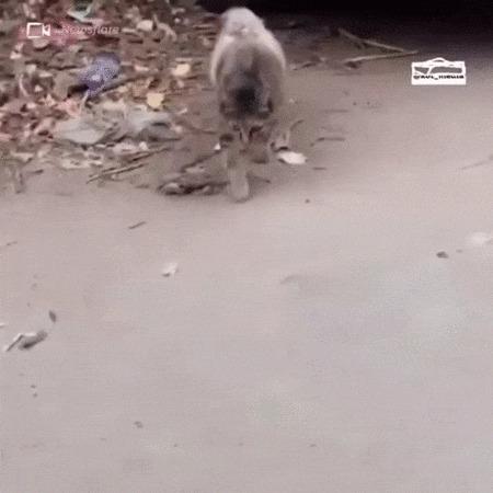 Раненая кошка - мать отдала еду котенку Кот, Котята, Котомафия, Животные, Мама, Еда, Забота, Гифка