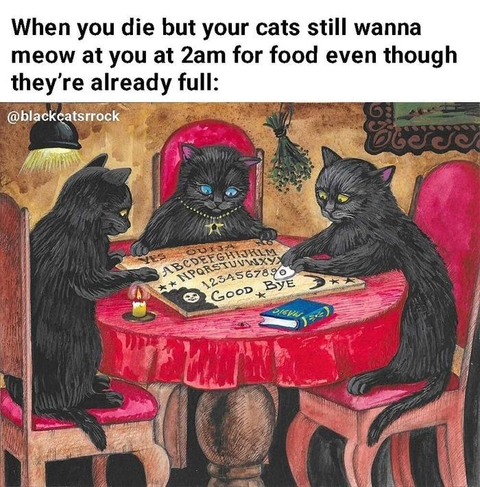 картинка ты умрешь кот тарелка
