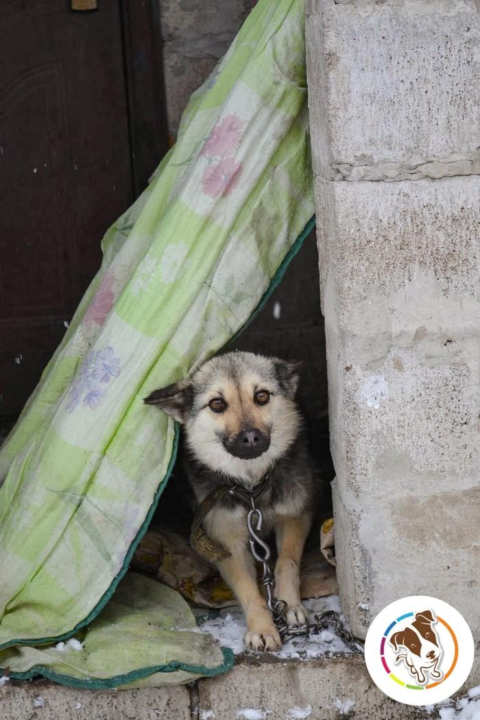 Хозяин бросил трёх собак на цепи охранять разрушенный дом Собака, Длиннопост, Питомец, Спасение, Приют, Реальная история из жизни, Спасение животных, Доброта