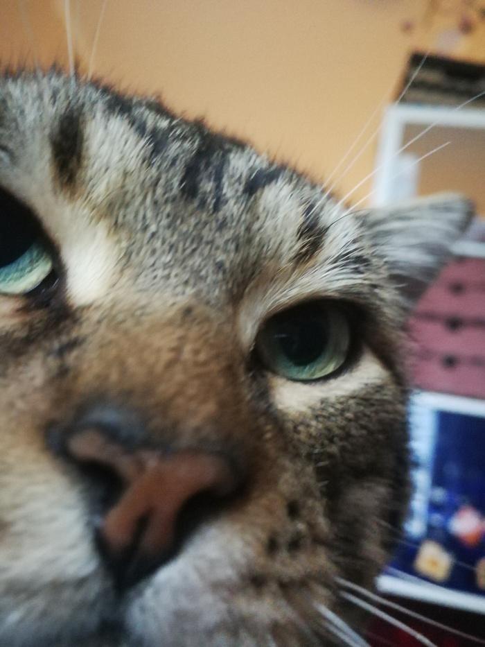 Кот Жора нашел дом Котомафия, Кот, Бездомные животные, Фотография, Текст, Длиннопост