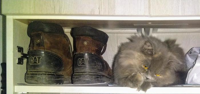Три кота.