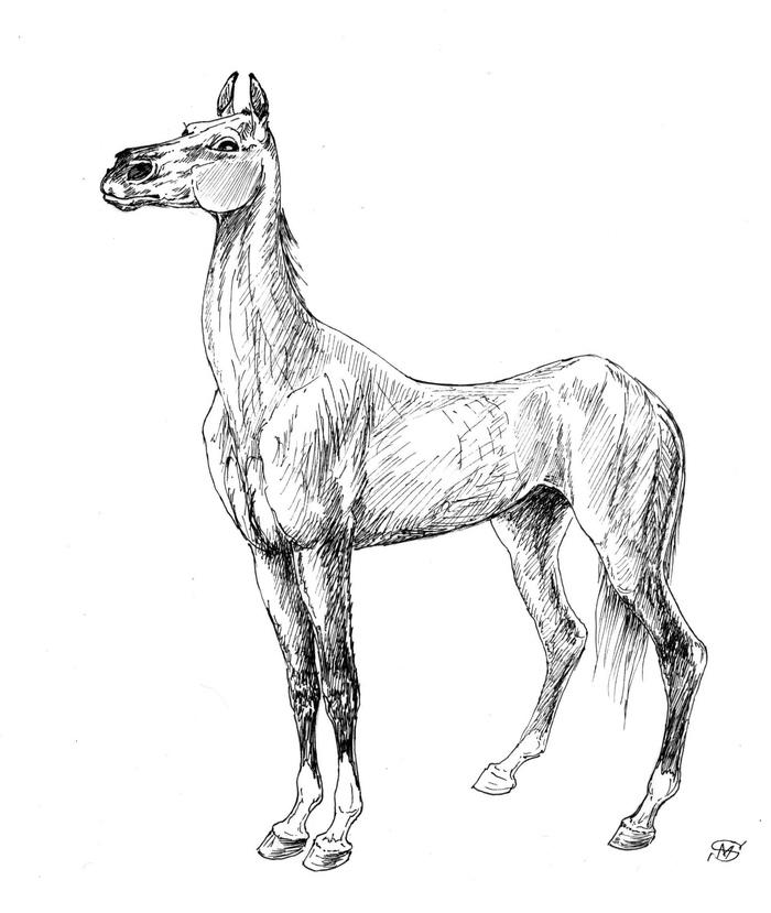 Чёрная лошадь Лошади, Животные, Люди, Жеребенок, Реальная история из жизни, Длиннопост