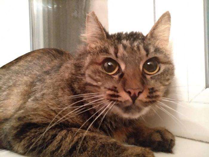 Кошку подбросили в детский сад! Кот, Москва, В добрые руки, Предательство, Длиннопост, Без рейтинга