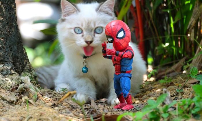 Игрушечный человек-паук и кошки Человек-Паук, Кот, Животные, Фотография, Игрушки, Длиннопост