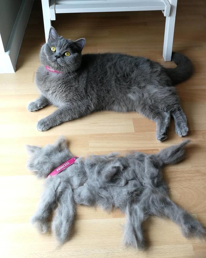 Вычёсывал кота, начесал ещё одного