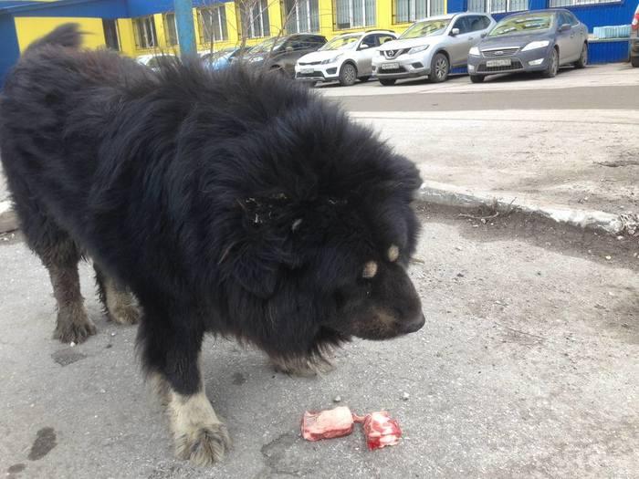 Пельмеш Собака, Самара, Длиннопост
