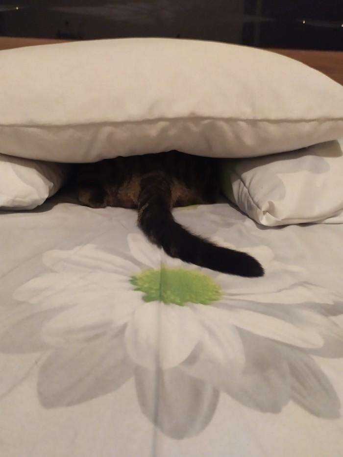 Кот-это жидкость... Кот, Пожалуй здесь удобно, Длиннопост