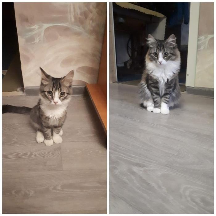 До и после. Сибирячка из подъезда. Кот, Помощь, Длиннопост
