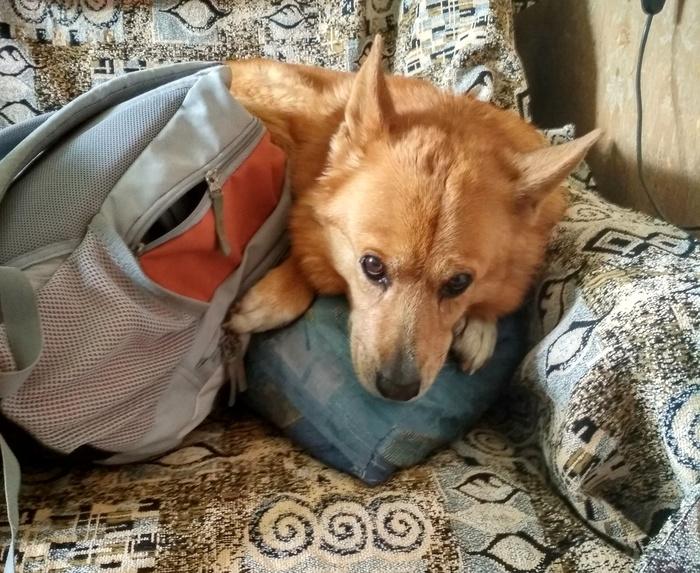 Битва за диван Собака, Милота, Длиннопост