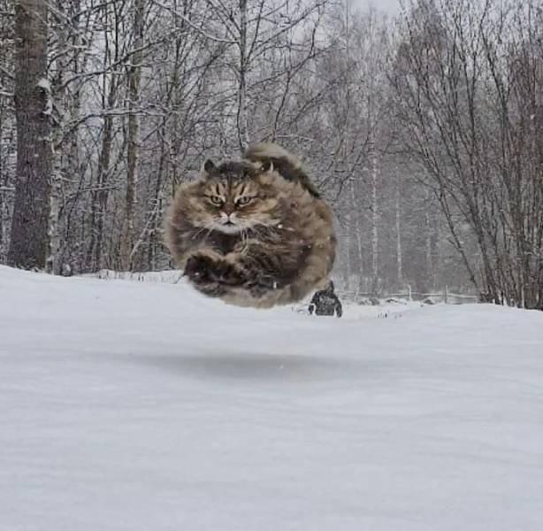 Этому посёлку нужен новый герой - сферический кот в воздухе