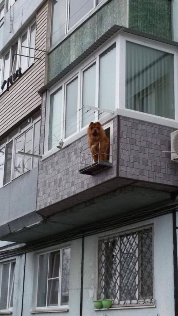 Смотрящая за районом Чау-Чау, Большой брат, Балкон, Длиннопост