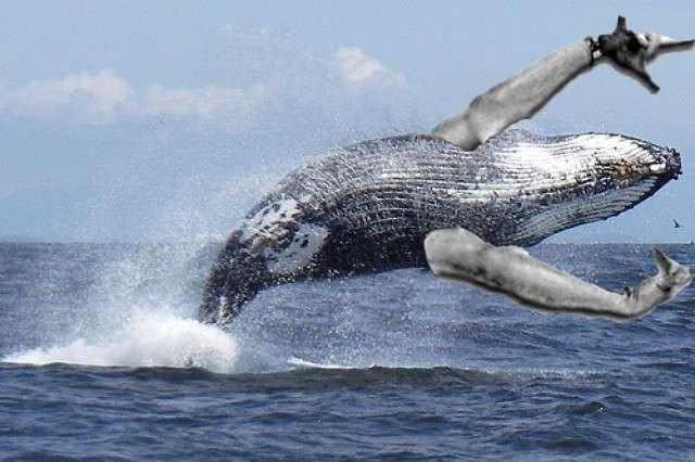 Начни утро с приятных вестей Горбатый кит, Популяция, Радость, Позитив, Восстановлена, Ура, Дикие животные