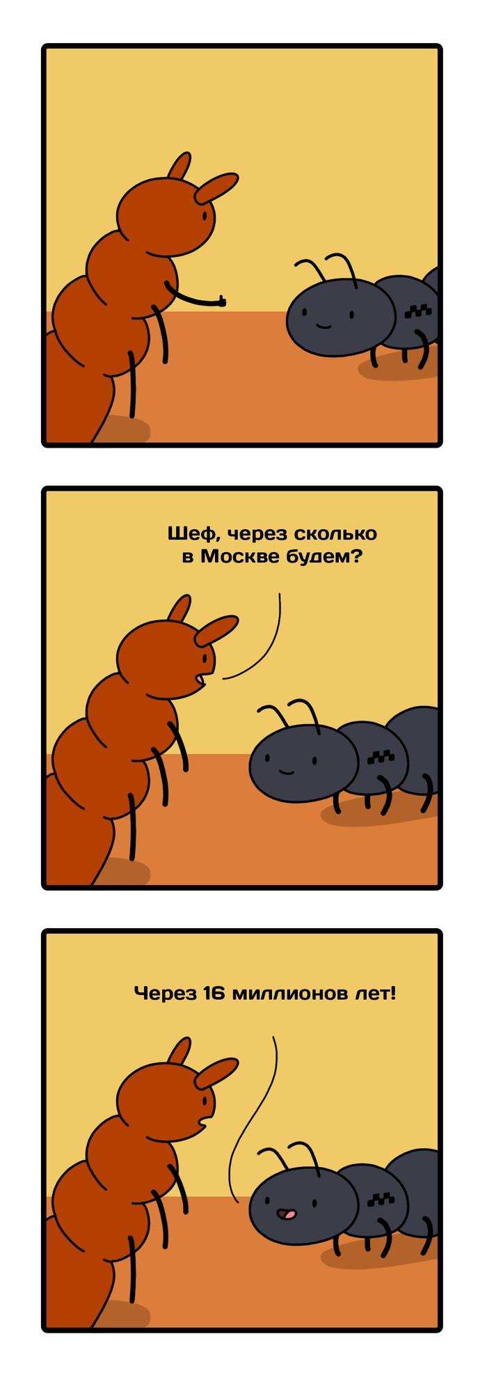 Новость 934:Ногохвостки возрастом 16 миллионов лет прокатились на муравье и термите Археология, Такси, Наука, Длиннопост