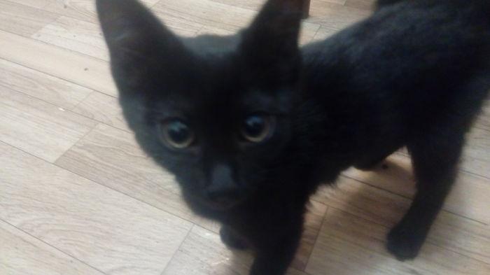 Помогите найти любящего хозяина для маленькой черненькой кошечка в Краснодаре! Кот, Хозяин, Длиннопост