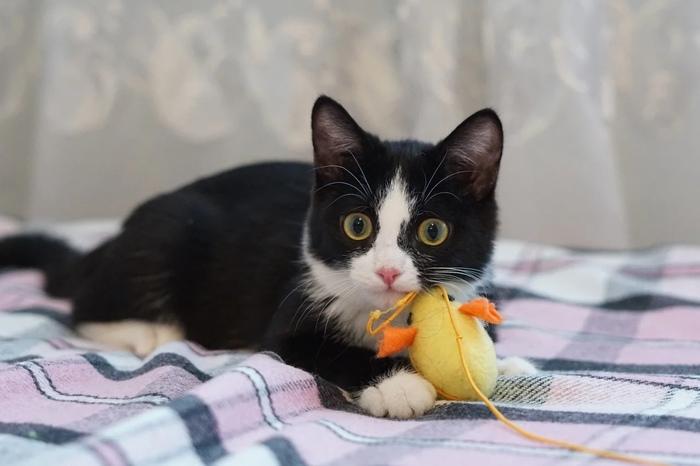 Как кошка Генриетта умерла и через два месяца воскресла Кот, Котоистории, Длиннопост