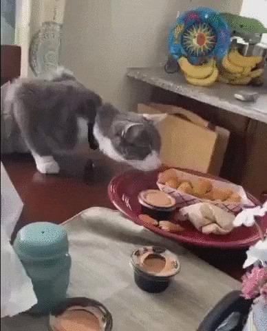 Что это у тебя тут такое? Кот, Котомафия, Домашние животные, Еда, Стол, Гифка