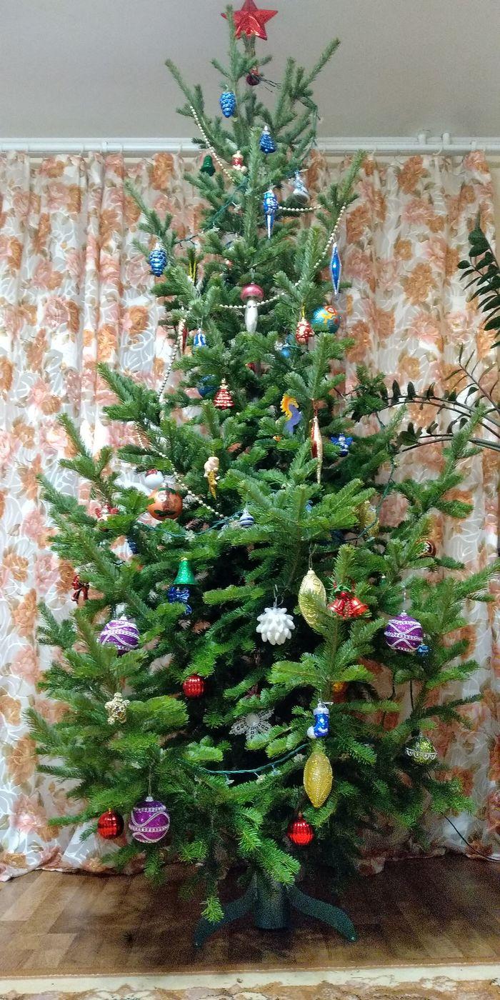 Напился сам, напои и ёлку! Новогодняя елка, Ёлки, Праздники, Своими руками, Сельское хозяйство, Рукоделие с процессом, Длиннопост
