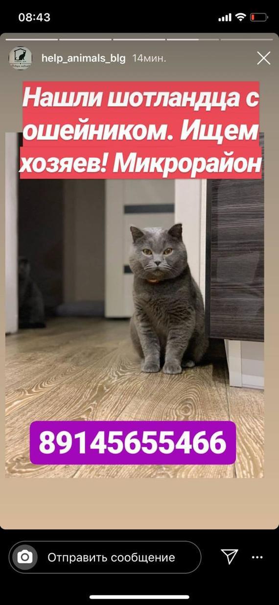 Благовещенск! ищем хозяина! Потерялся кот, В добрые руки, Длиннопост