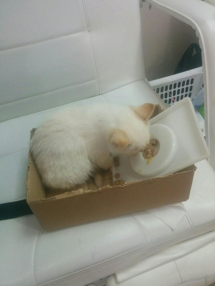 Нужно пристроить котейку Без рейтинга, Найденыш, Передержка, Помощь, Длиннопост, Котята, Кот, В добрые руки