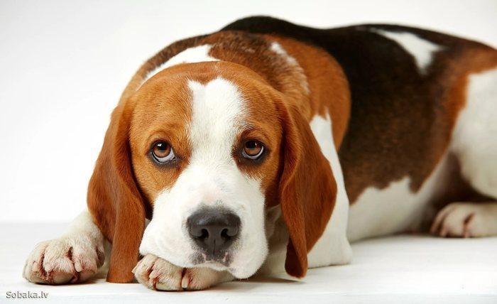 Собачники! Будьте людьми Собаки и люди, Соседи, Закон, Собака