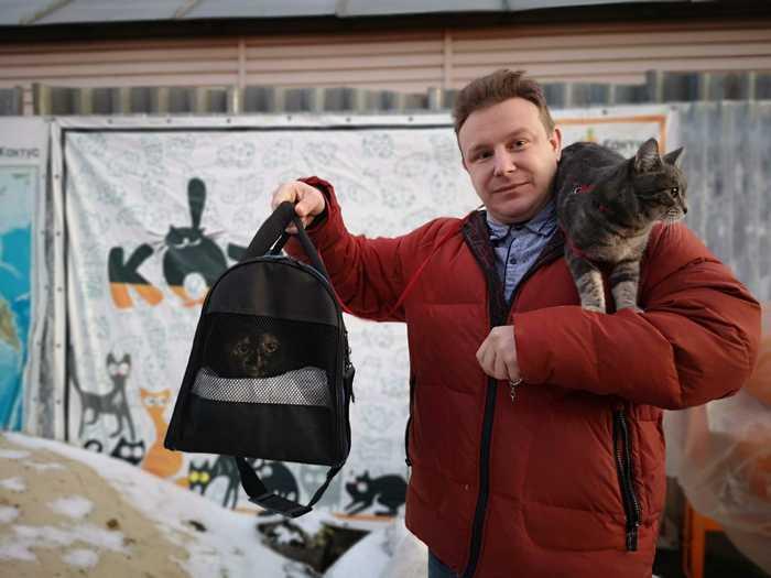"""Жизнь домашнего приюта """"Котоленд"""" 209 Кот, Приют, Липецк, Добро, Помощь, Котоленд, Длиннопост, В добрые руки"""
