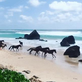 """Нихи Сумба - это остров, который служит пристанищем для скаковых лошадей """"на пенсии"""", чтобы прожить остаток дней, бегая по пляжам"""