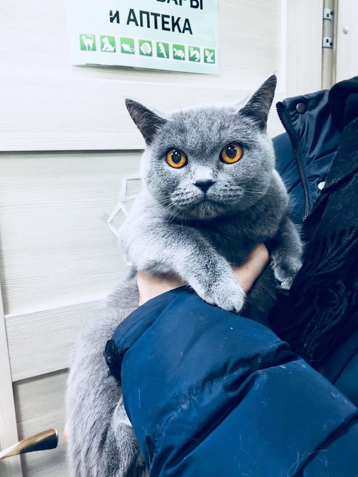Кошечка отказница ищет свой дом. Сейчас находится в клинике. Идти ей некуда. Санкт-Петербург и Ленинградская область