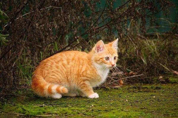 Нафаня. Котёнок из подвала