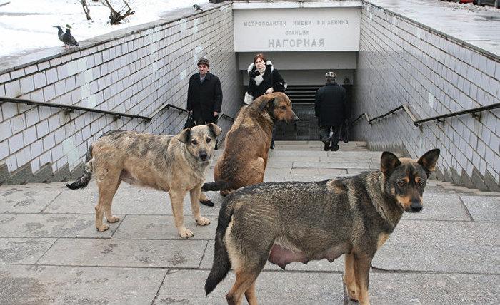 О зоолюбителях и бродячих псах пост!