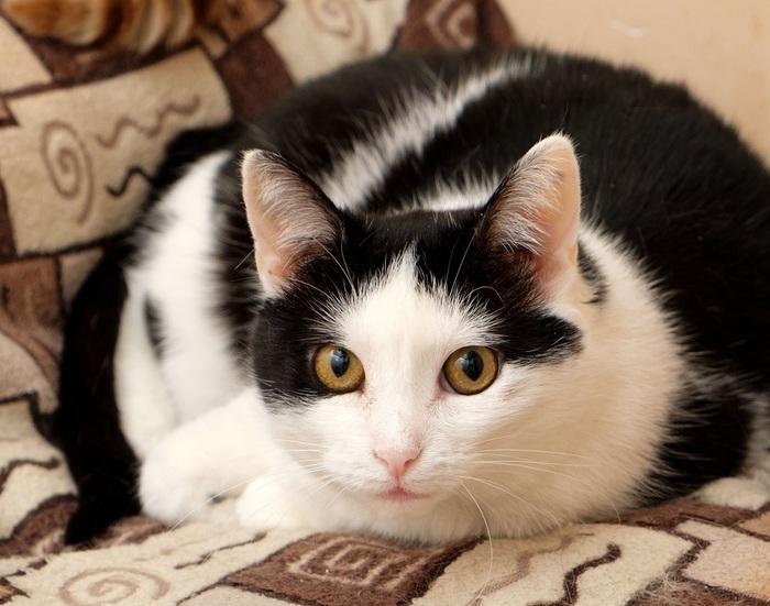 Кошечка Белка ищет новый дом Приют муркоша, Приют для животных, Кот, В добрые руки, Помощь, Москва, Без рейтинга, Длиннопост