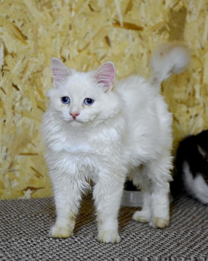 Самый грустный кот в Екб ищет дом Кот, В добрые руки, Екатеринбург, Грустныйкотик, Без рейтинга, Длиннопост