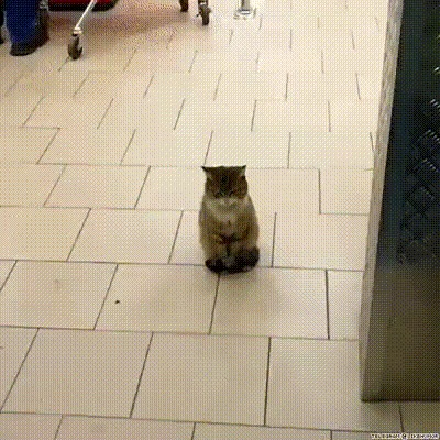 Я тут главный Кот, ЧСВ, Подчинение, Гифка