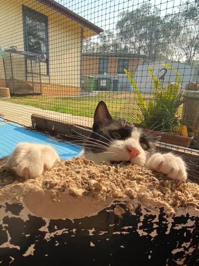 Краткая история о том, как котик коробке Кусь делал