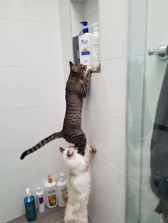 Держи крепко, они явно там что-то прячут от нас!