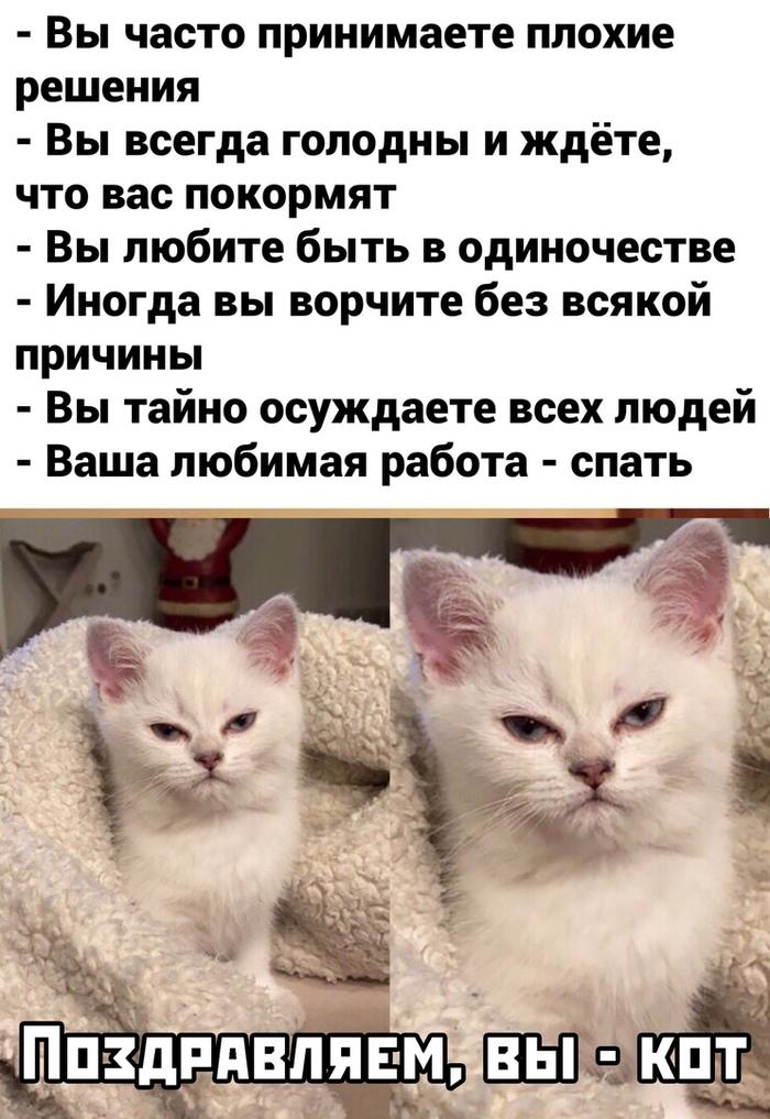 Я - кот
