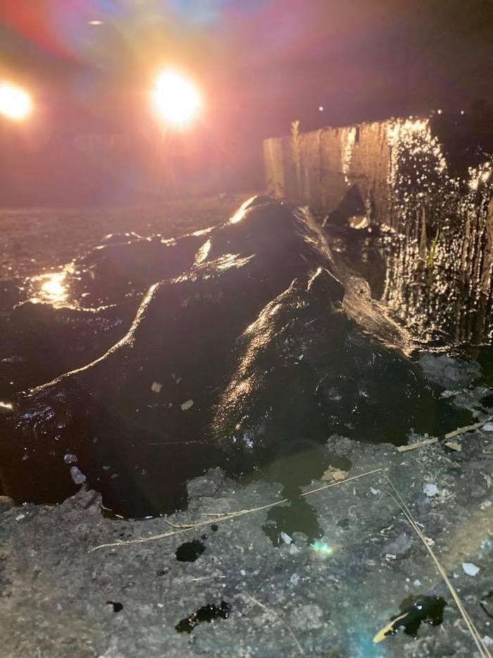 Дети нашли на пустыре чёрное нечто, которое оказалось собакой Собака, Спасение, Аргентина, Доброта, Длиннопост
