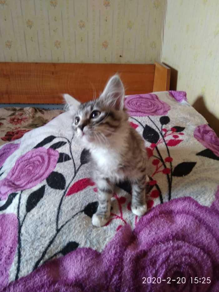 Пушистый, Очаровательный котик в поисках дома