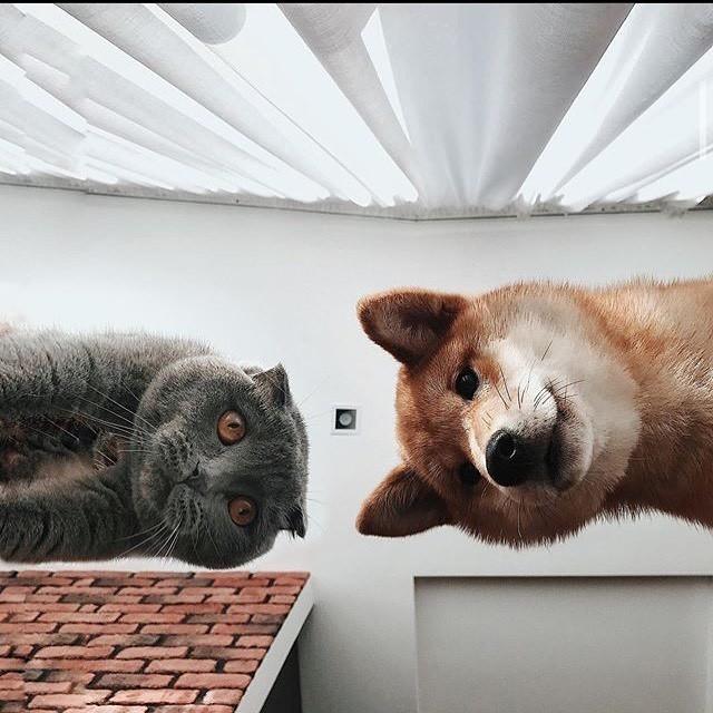 О, смотри, он проснулся. Где наш завтрак?