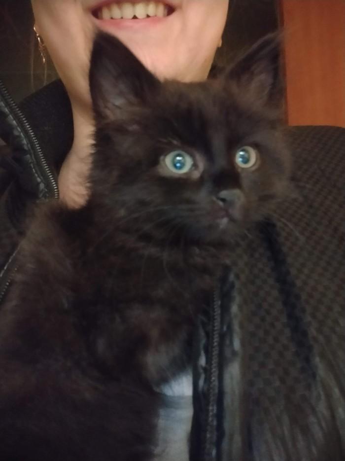 Черное чудо или как я неожиданно стала хозяйкой кошки